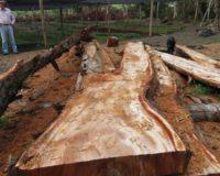 maderas finas